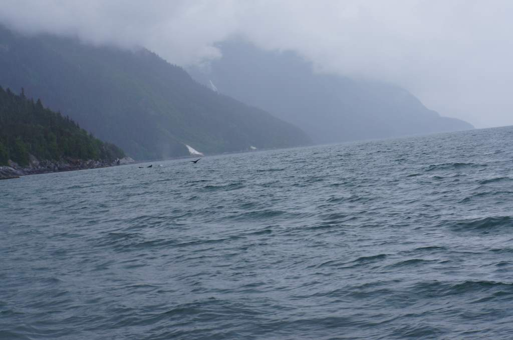 Look close!  You'll see humpback whale tails.