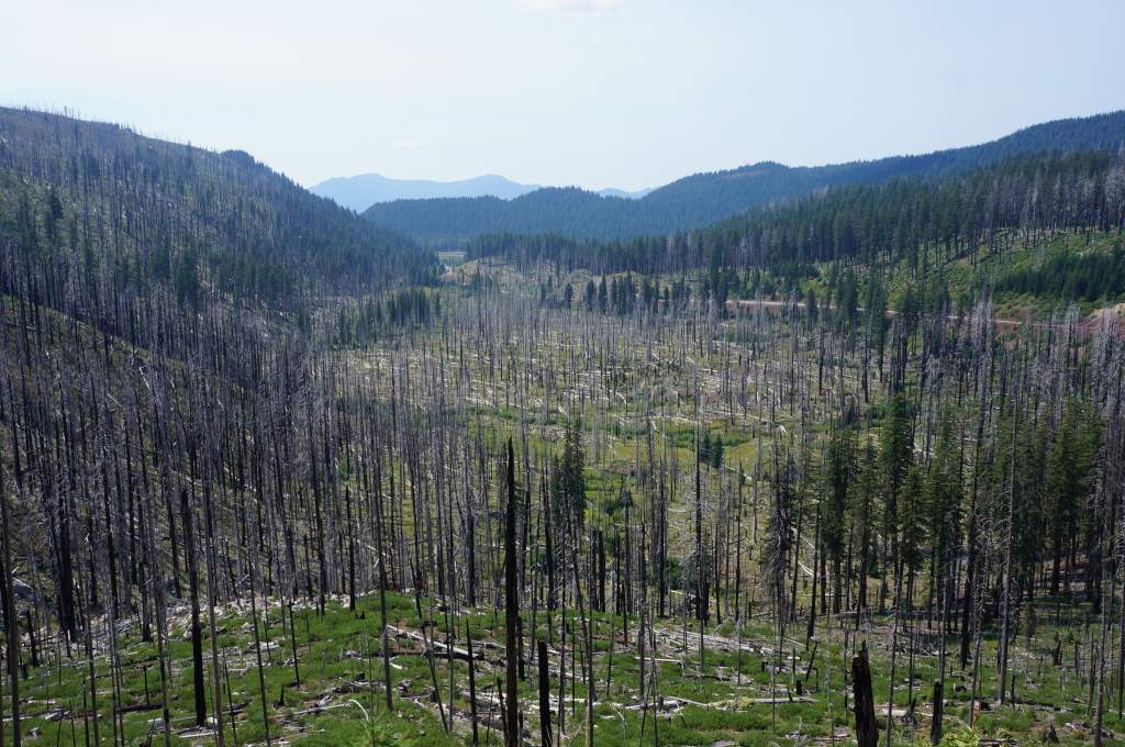 Forest fire evidence at the top of Santiam Pass.