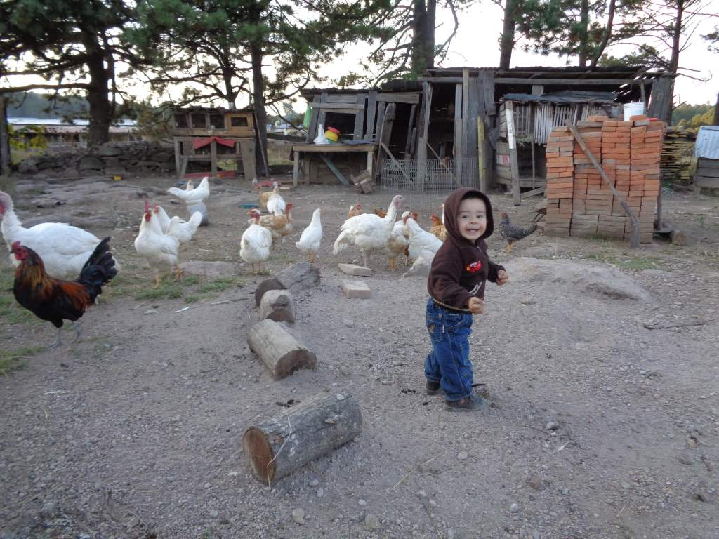 Enoc and the chickens.  There were over 100 chickens there!