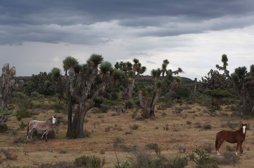 Threatening sky, huge cacti, and horses.  I think this photo is complete.