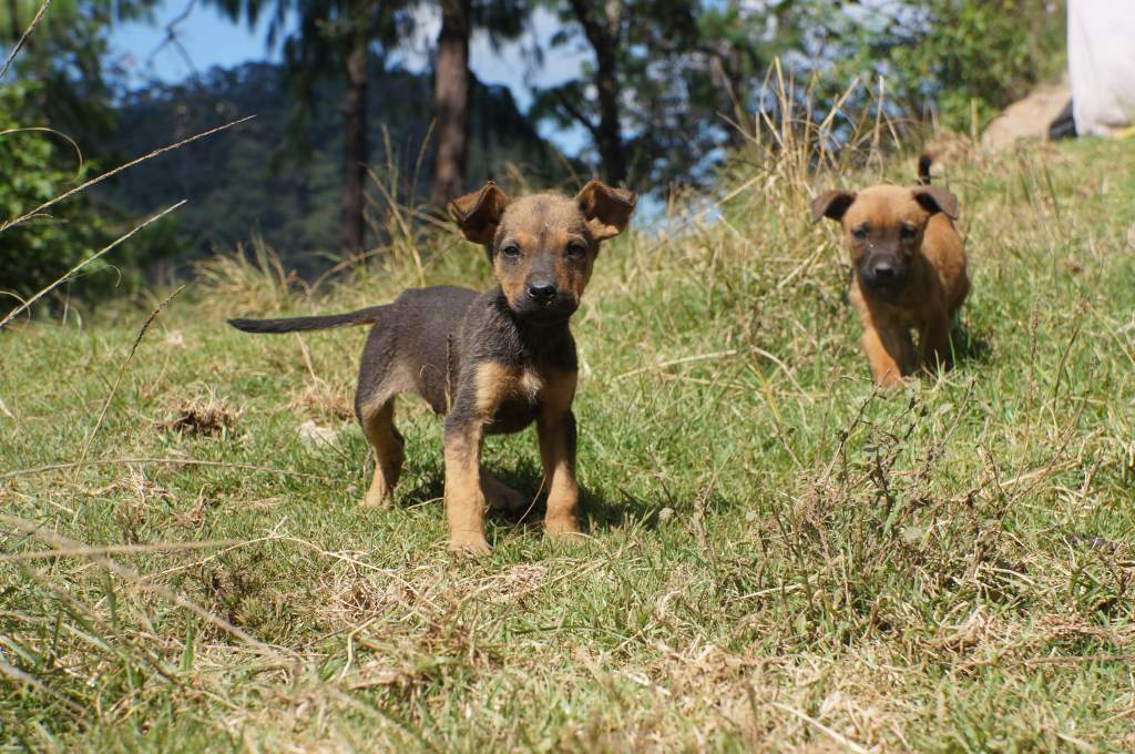 Daisy won't stop on the descent for many reasons -- but puppies are one of them!