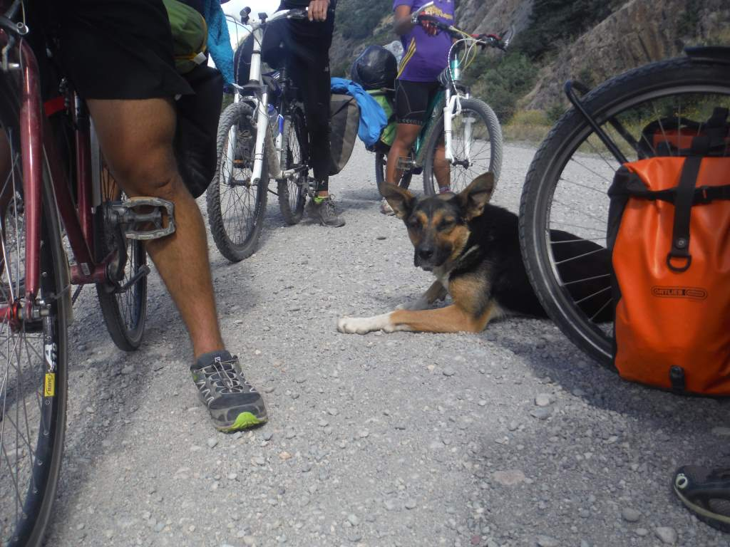 These cyclists had a stray dog run along with them for several kilometers.