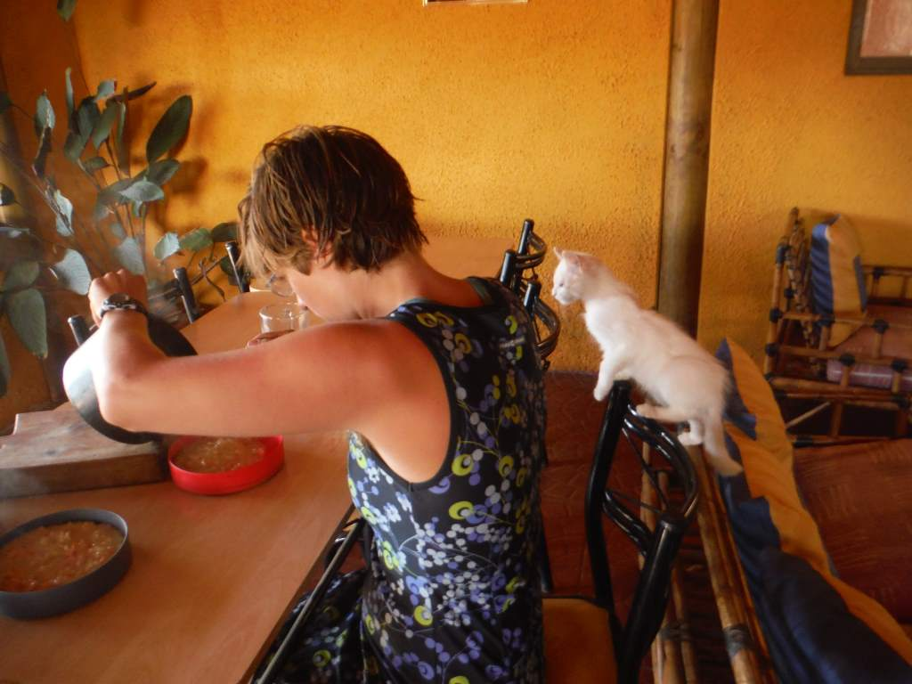 This kitten really wanted to share our meal.