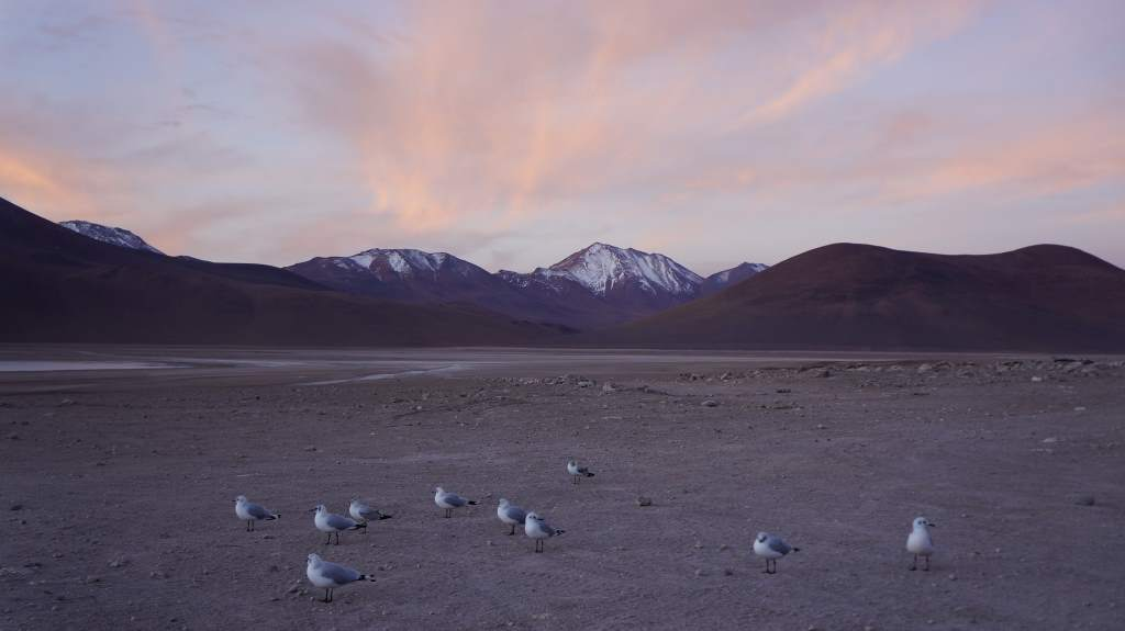 Seagulls at 14,000'.