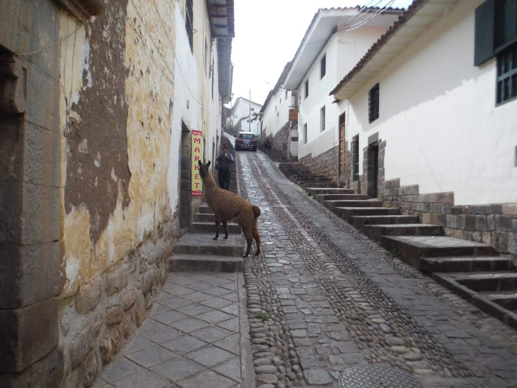 "Sometimes there is an alpaca in the street. Usually, there is also a little lady wanting a ""propina"" as well."