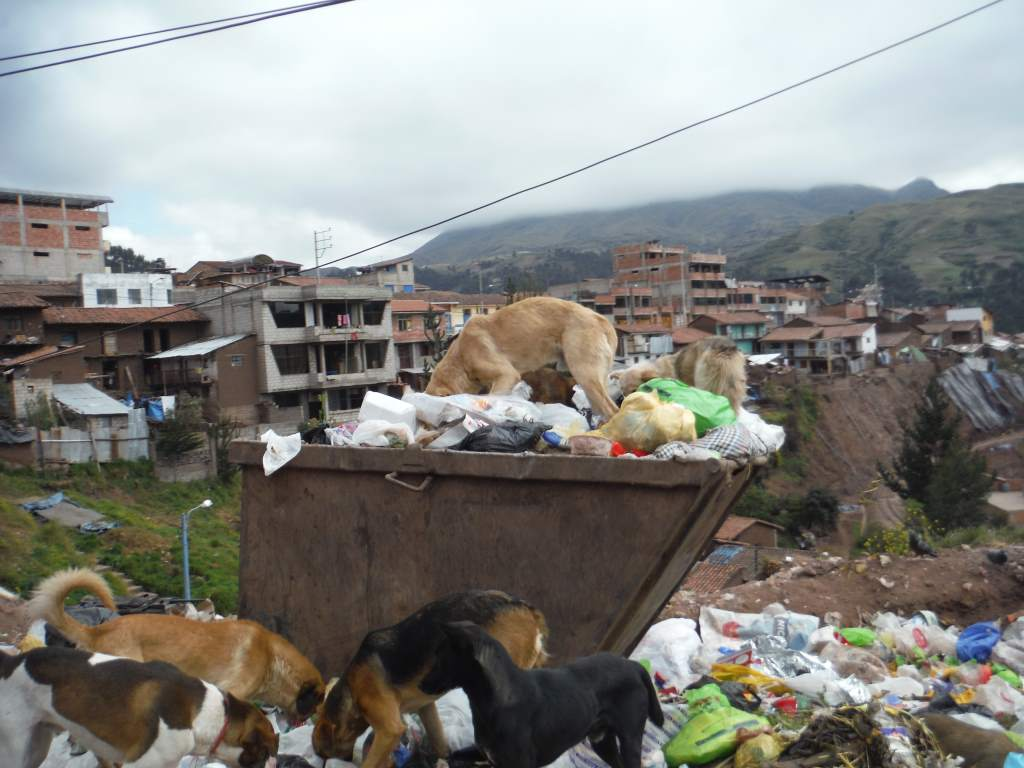 We saw this dumpster when leaving Cusco... Dogs gotta eat, too!