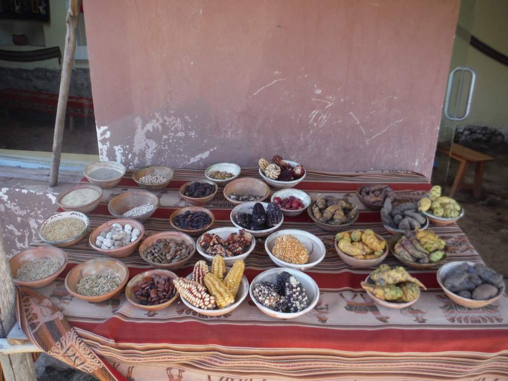 Local foods... many different types of beans, corn, and potatoes