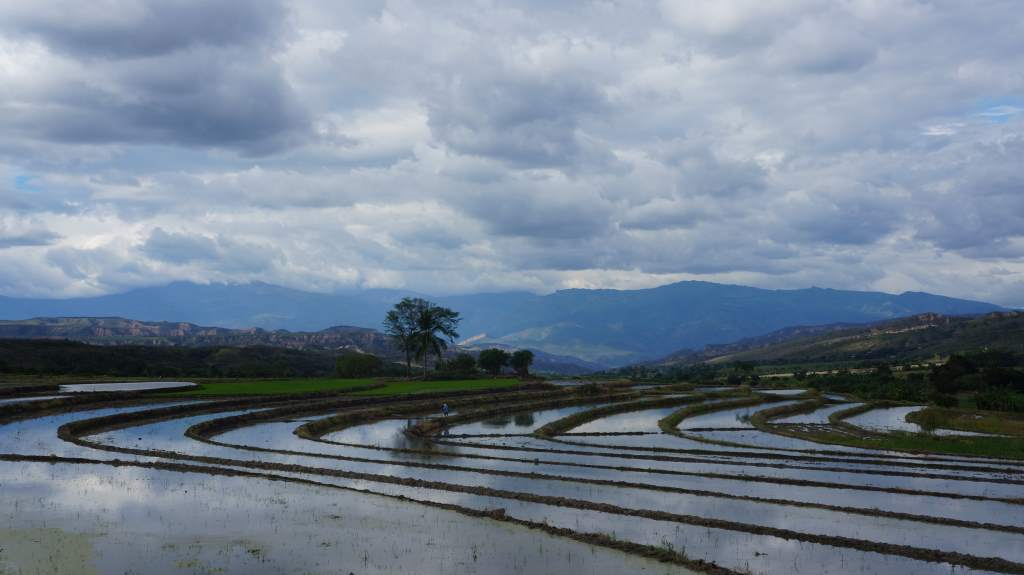 Rice paddies are everywhere