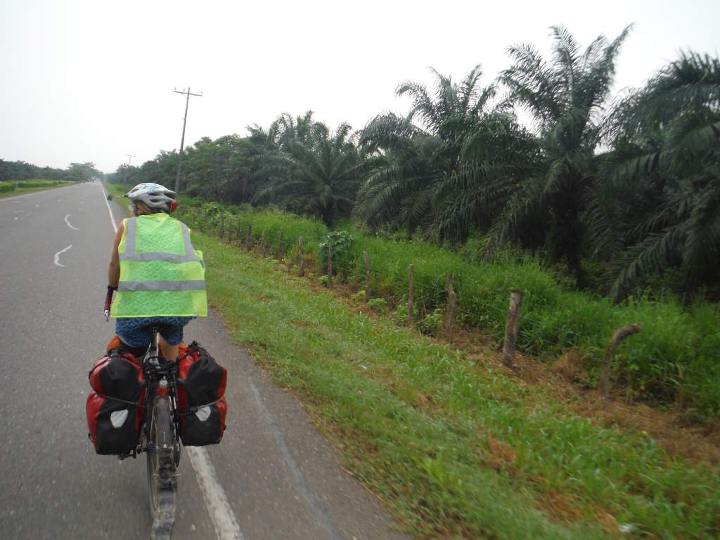 Riding along palm plantations. This is a big area for palm oil production